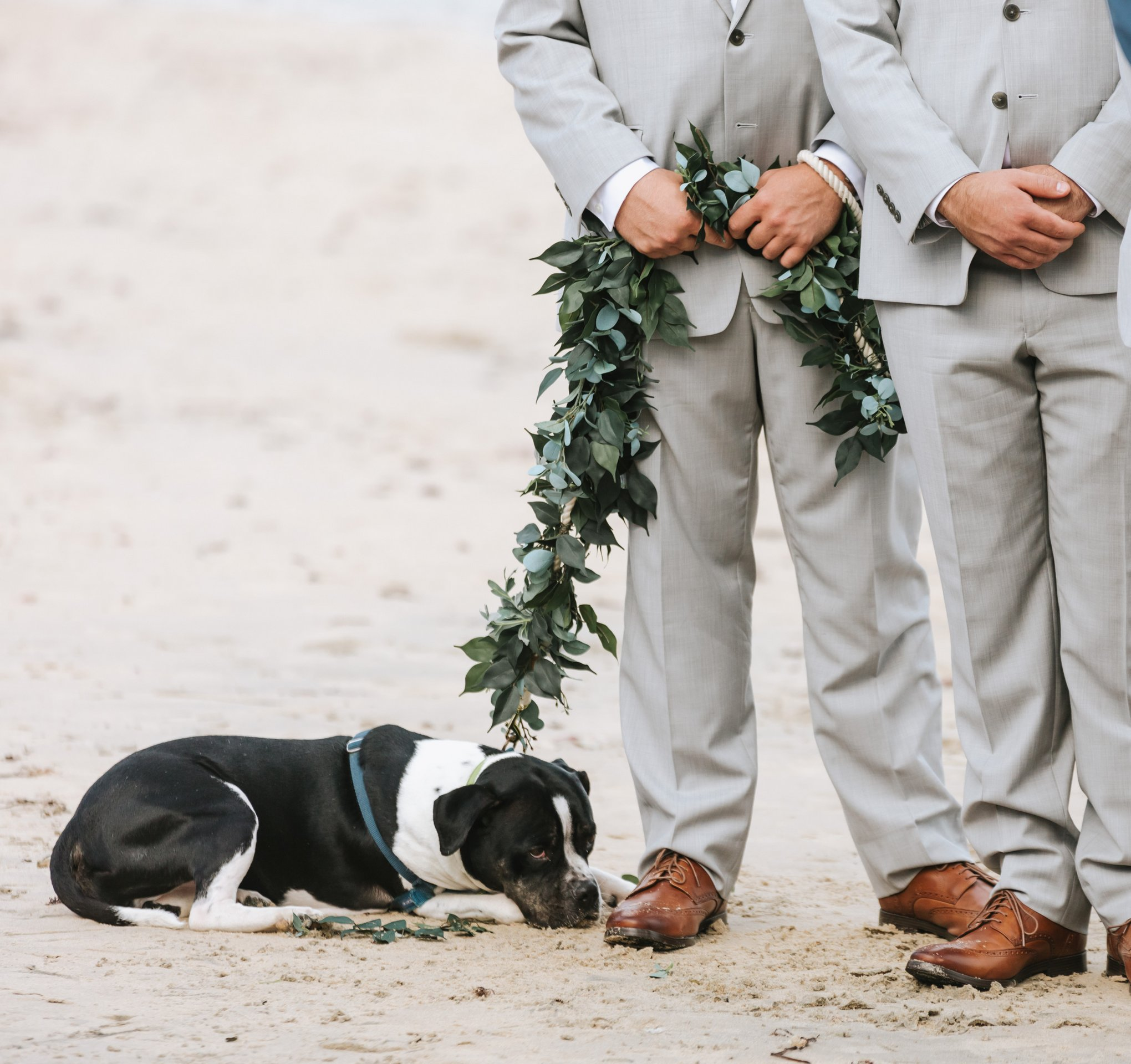Newport-Wedding-Backyard-Photographer-20.jpg