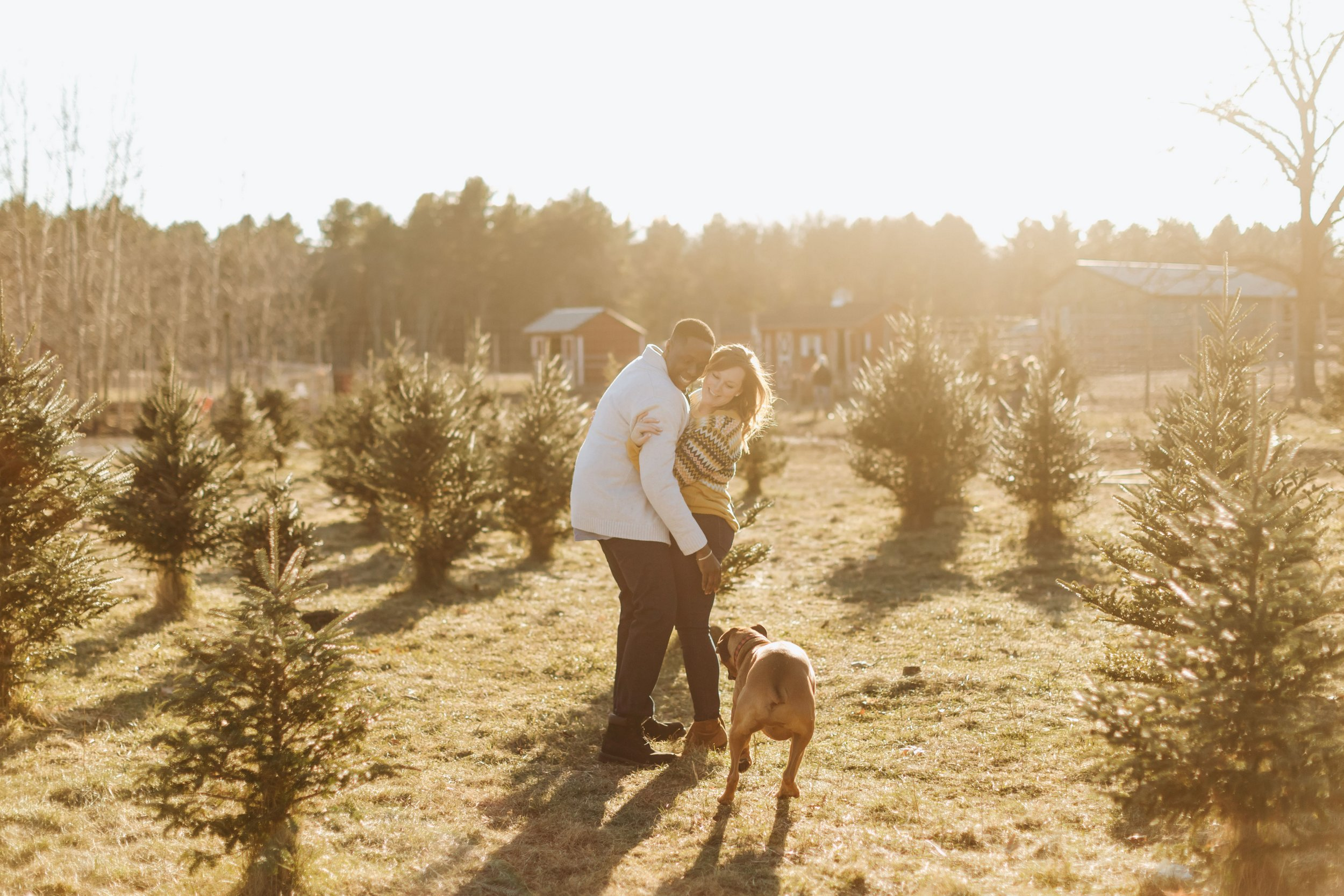 Winter-Tree-Farm-Engagement-Boston-9.jpg