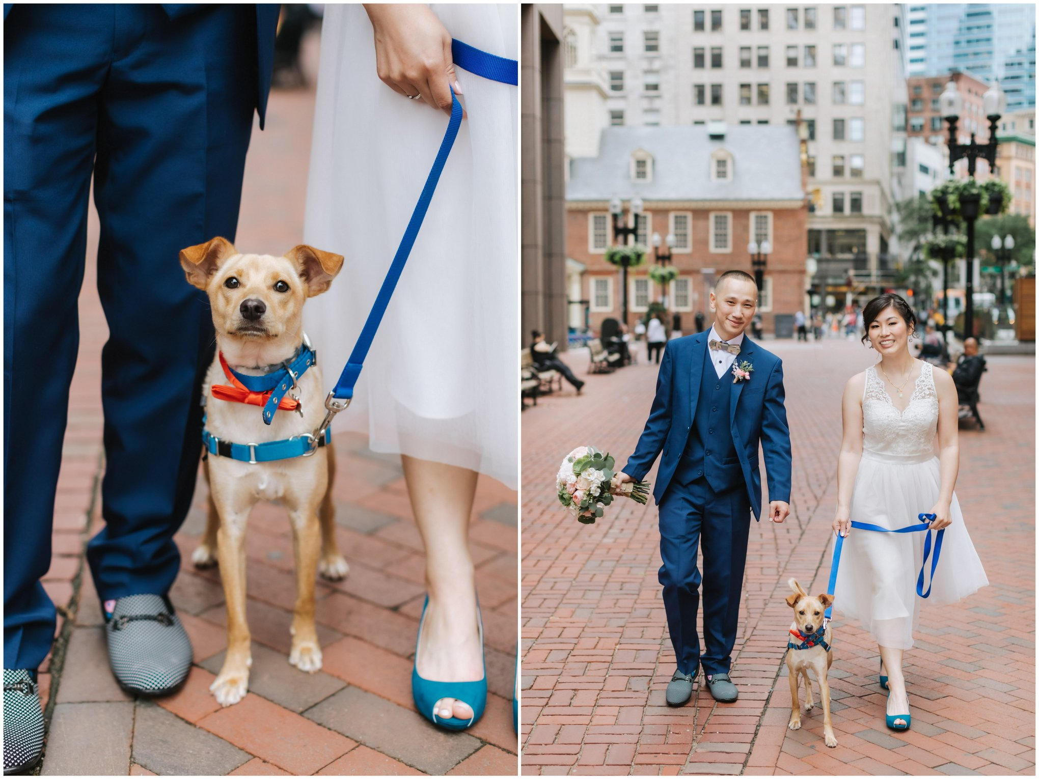 Boston-City-Hall-Dog-Wedding-Elopement-Public-Garden-7.jpg