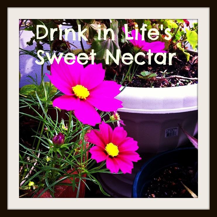 Drink in Life's Sweet Nectar.jpg.jpg