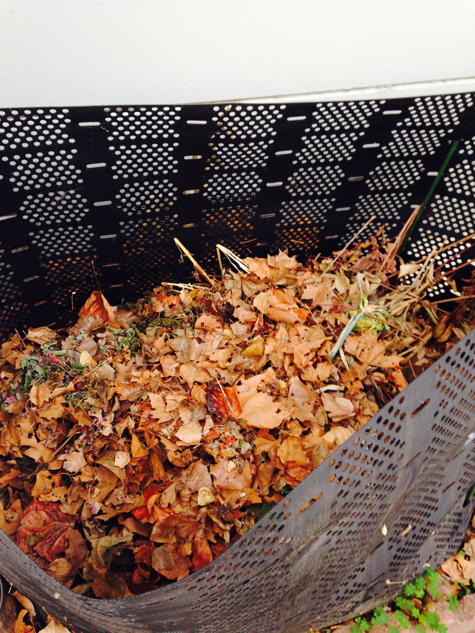 Compost bin full of fall leaves with a variety of goodies underneath.