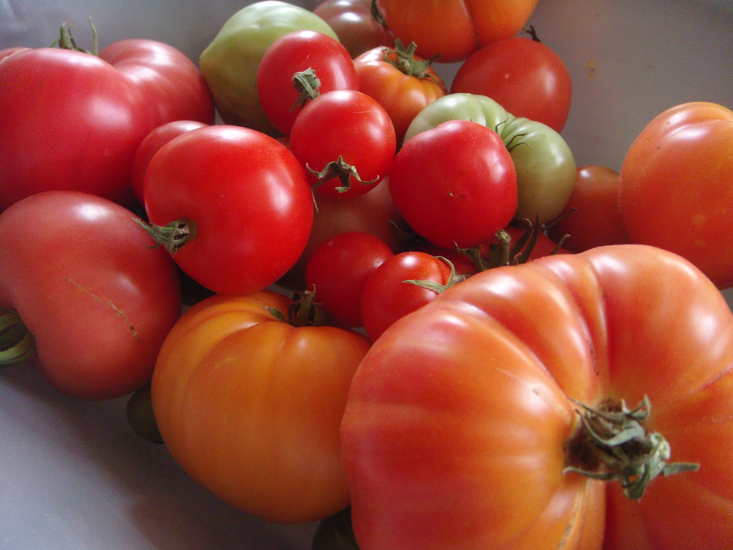 Tomato harvest from the last week of 2013 season.