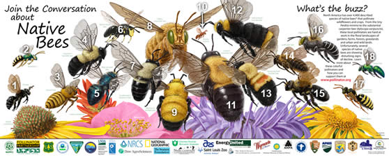 2001 Poster from the Pollinator Partnership.