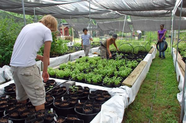 Earth Sangha Volunteers working in the Native Tree Nursery.