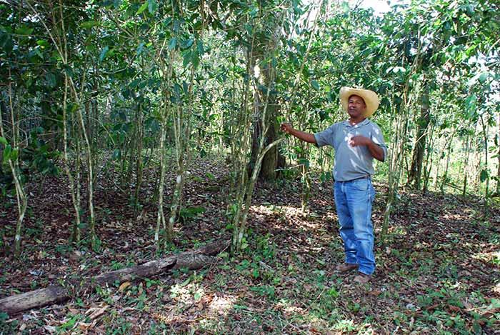 Earth Sangha Tree Bank Project in Hispaniola.