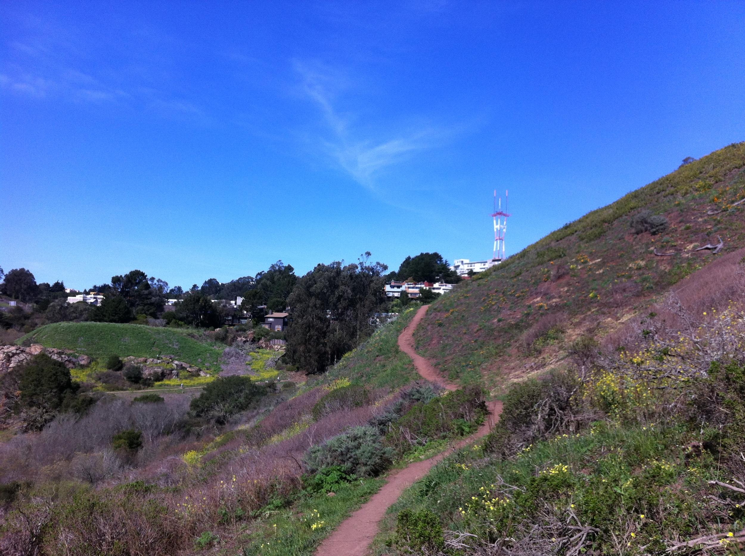 Trail in Glen Canyon Park, San Francisco.
