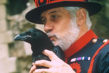 Beefeater kissing a raven at The Tower of London. Gives you an idea of the size of these birds.