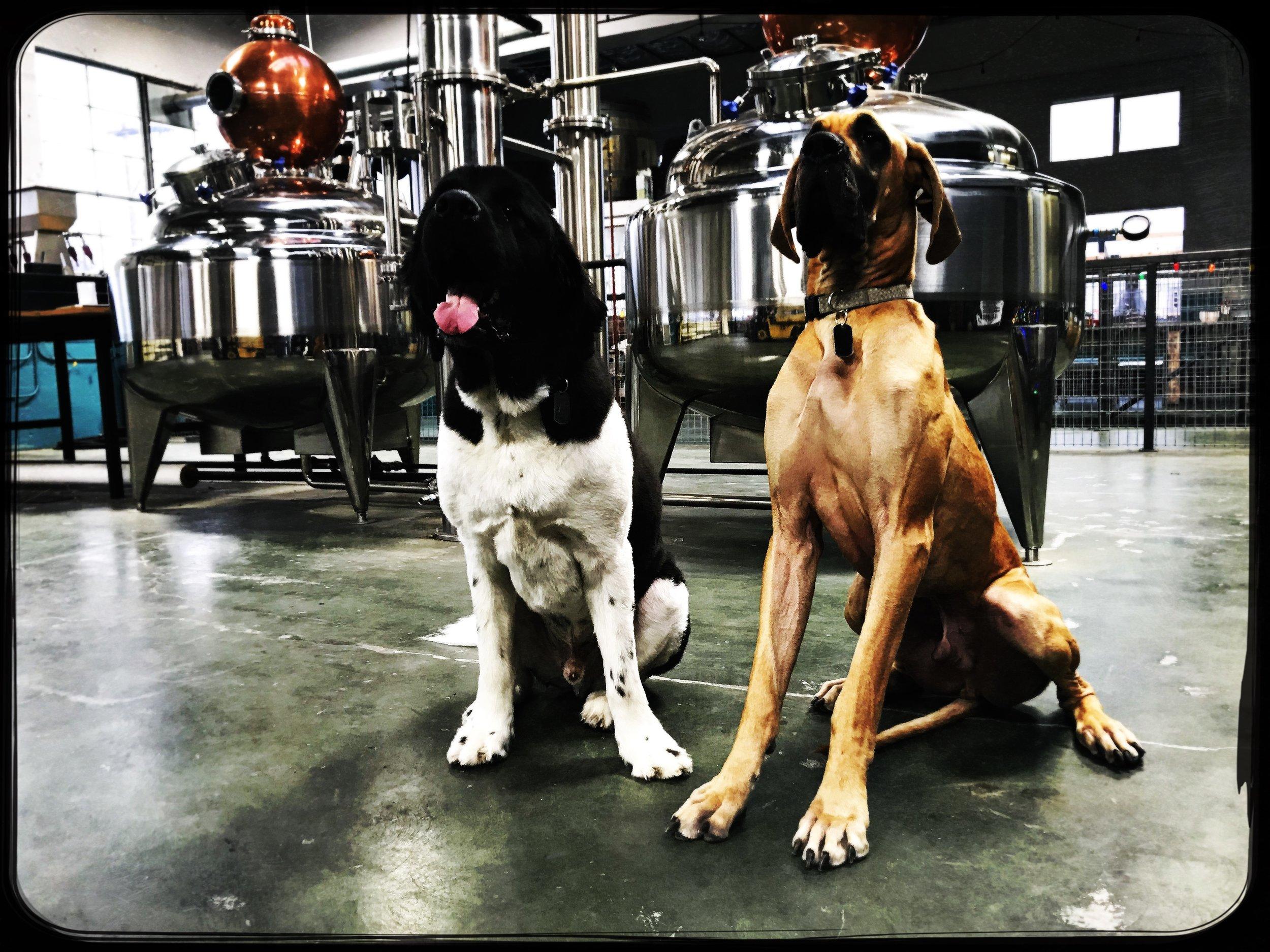 distillery-dogs