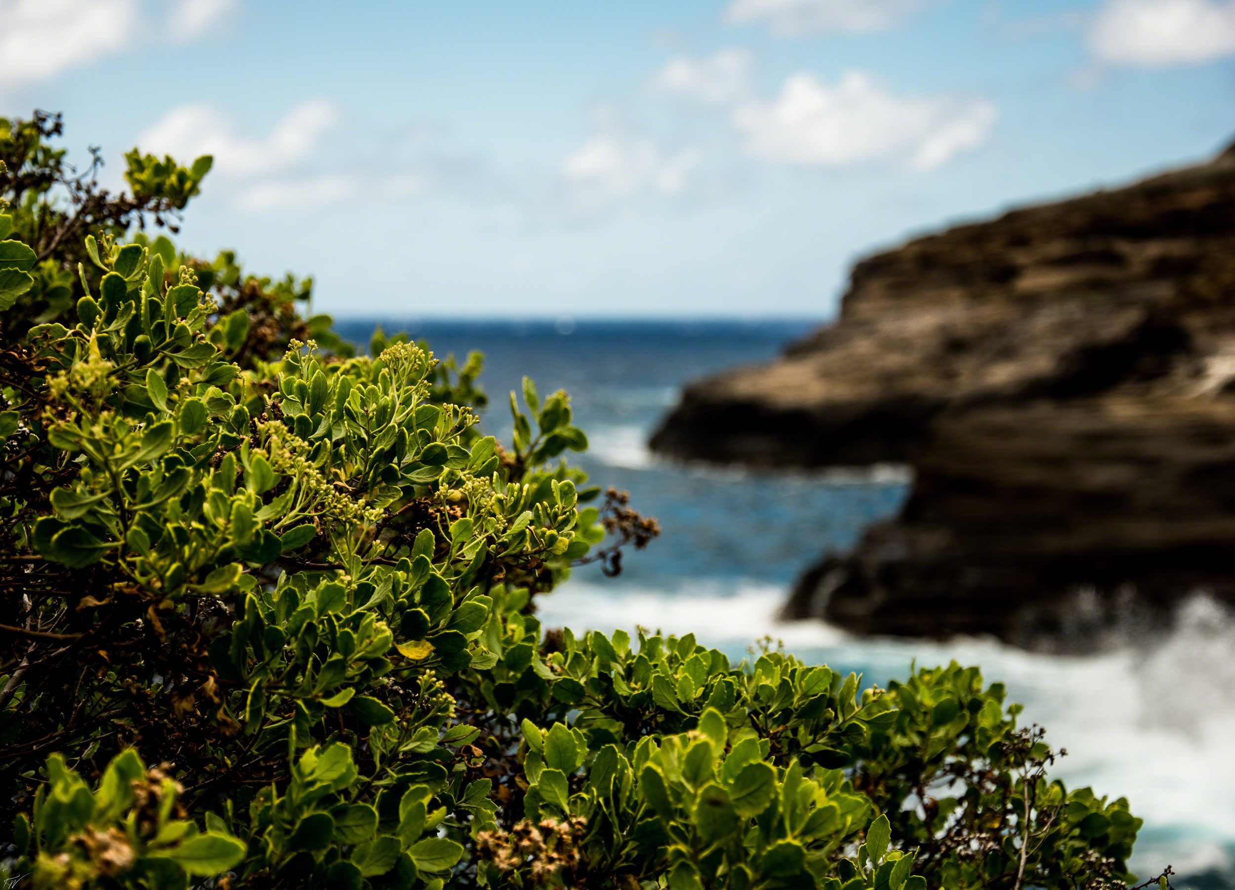 Hawaii-2016-9476-website.jpg
