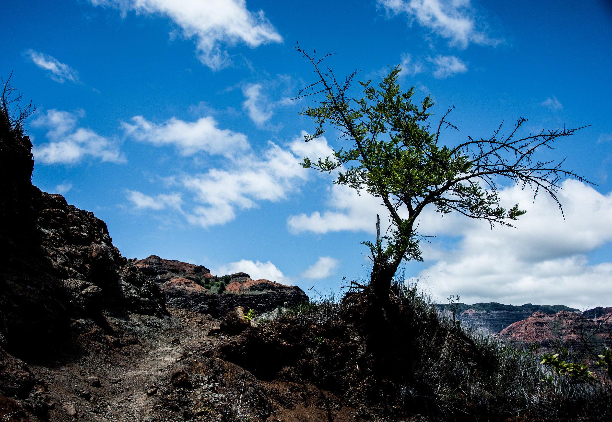 Hawaii-2016-0211-website.jpg