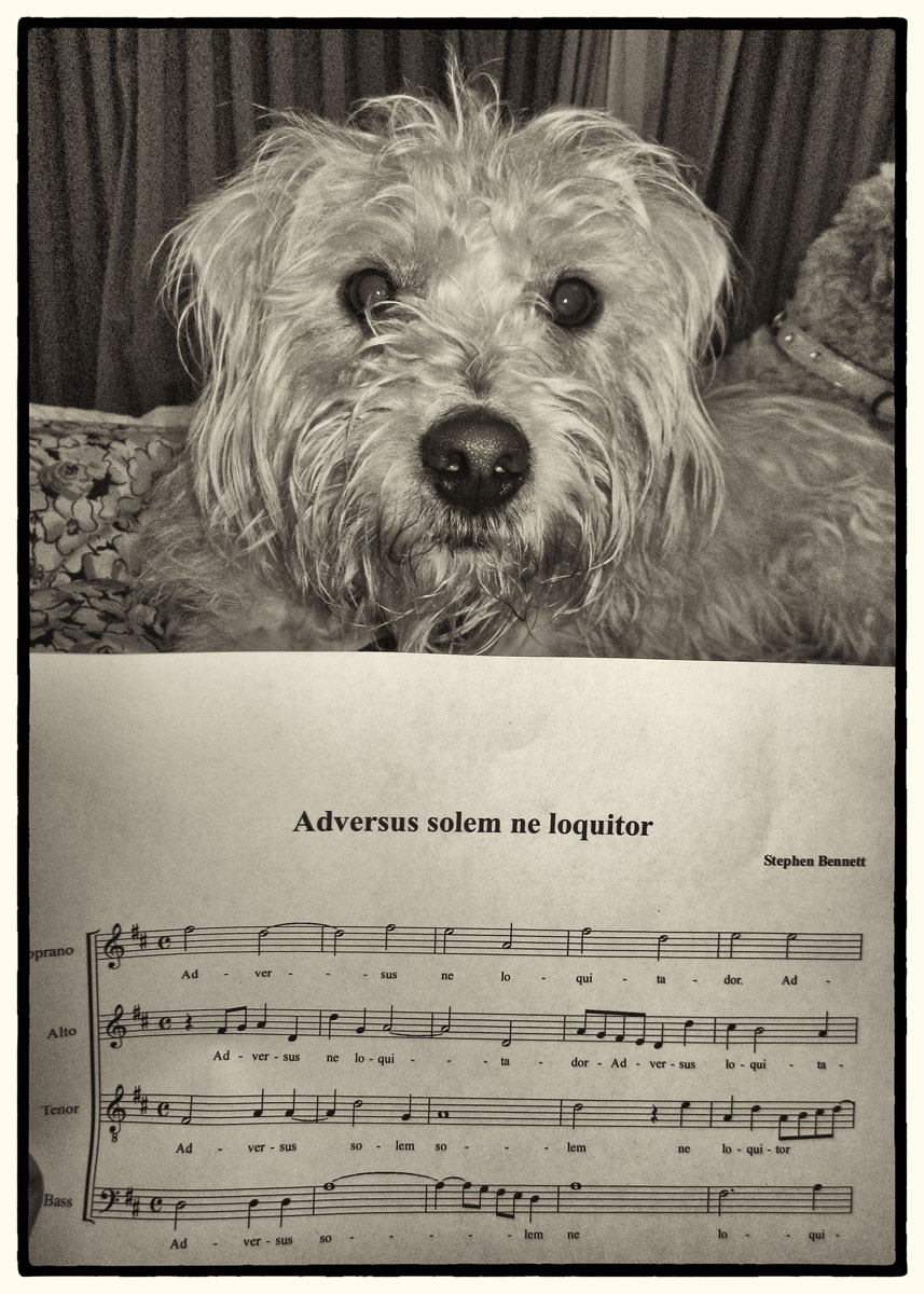 Steve's choral composition with canine chorister
