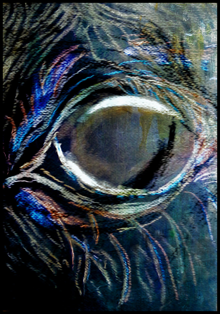 Scarlet's horse eye drawn with chalk pastels