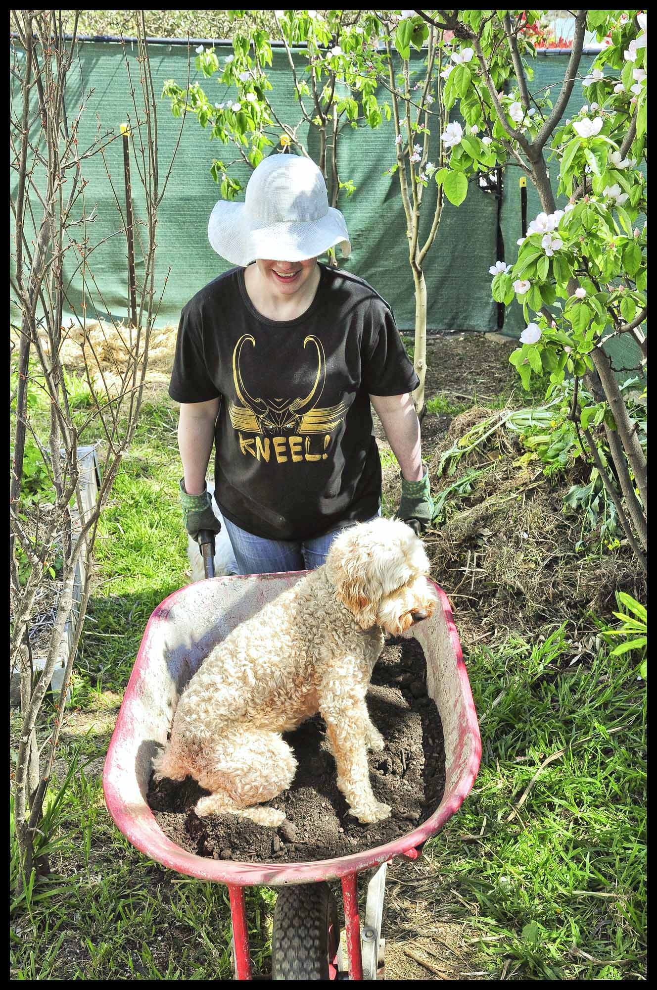 Every gardener needs a Labradoodle in their wheelbarrow. It adds so much joy to the whole gardening experience.