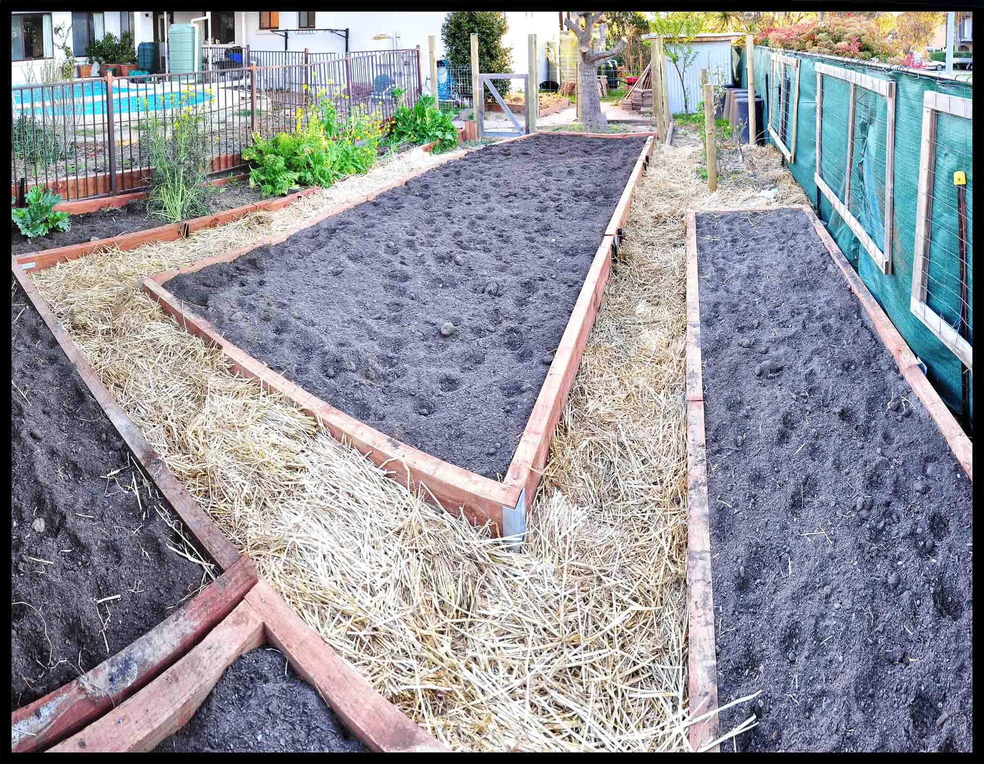 Finished new vegetable beds - an awesome weekend backyard blitz.