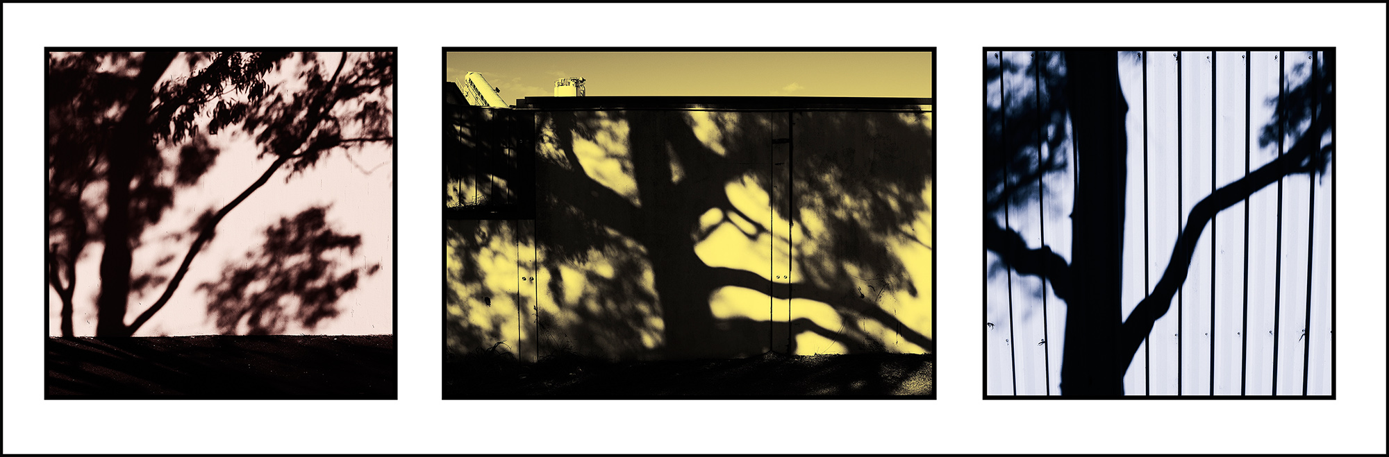Steve's urban tree shadows