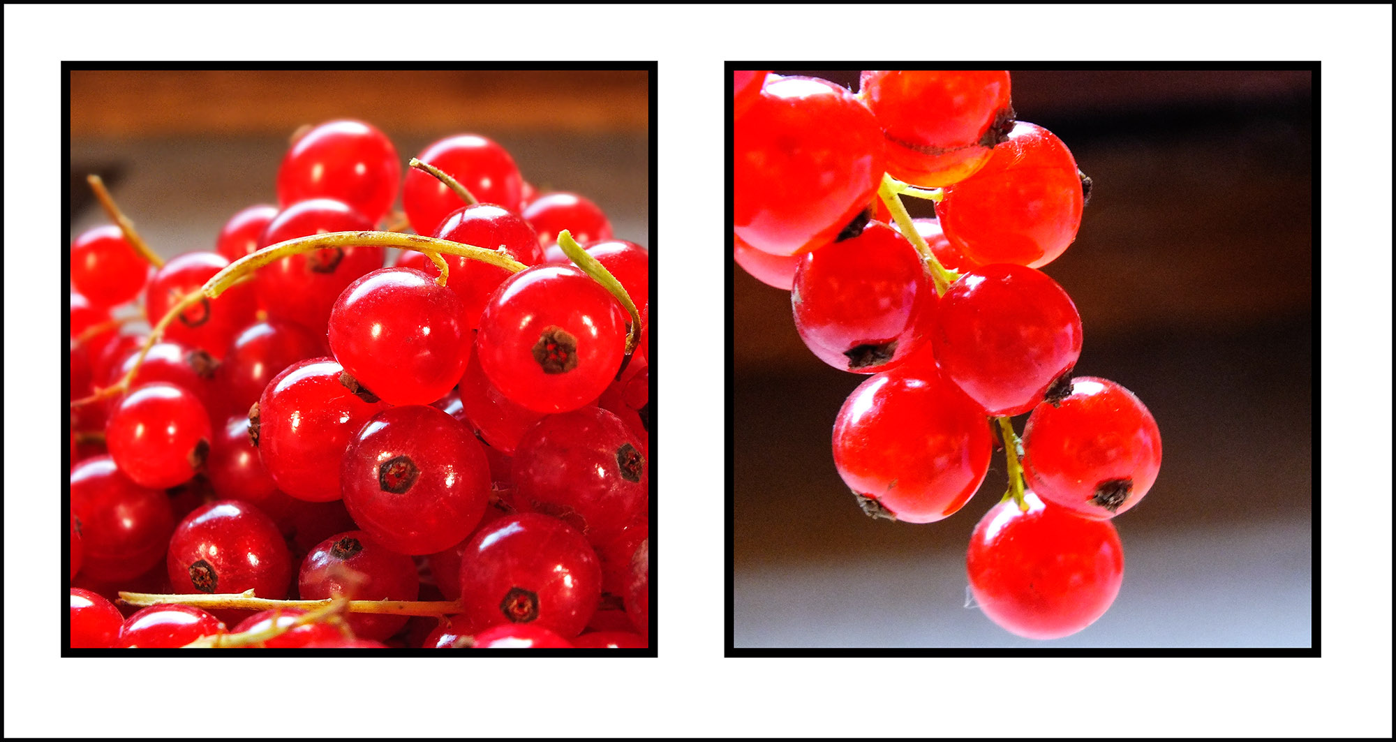 Trish's red currant jelly