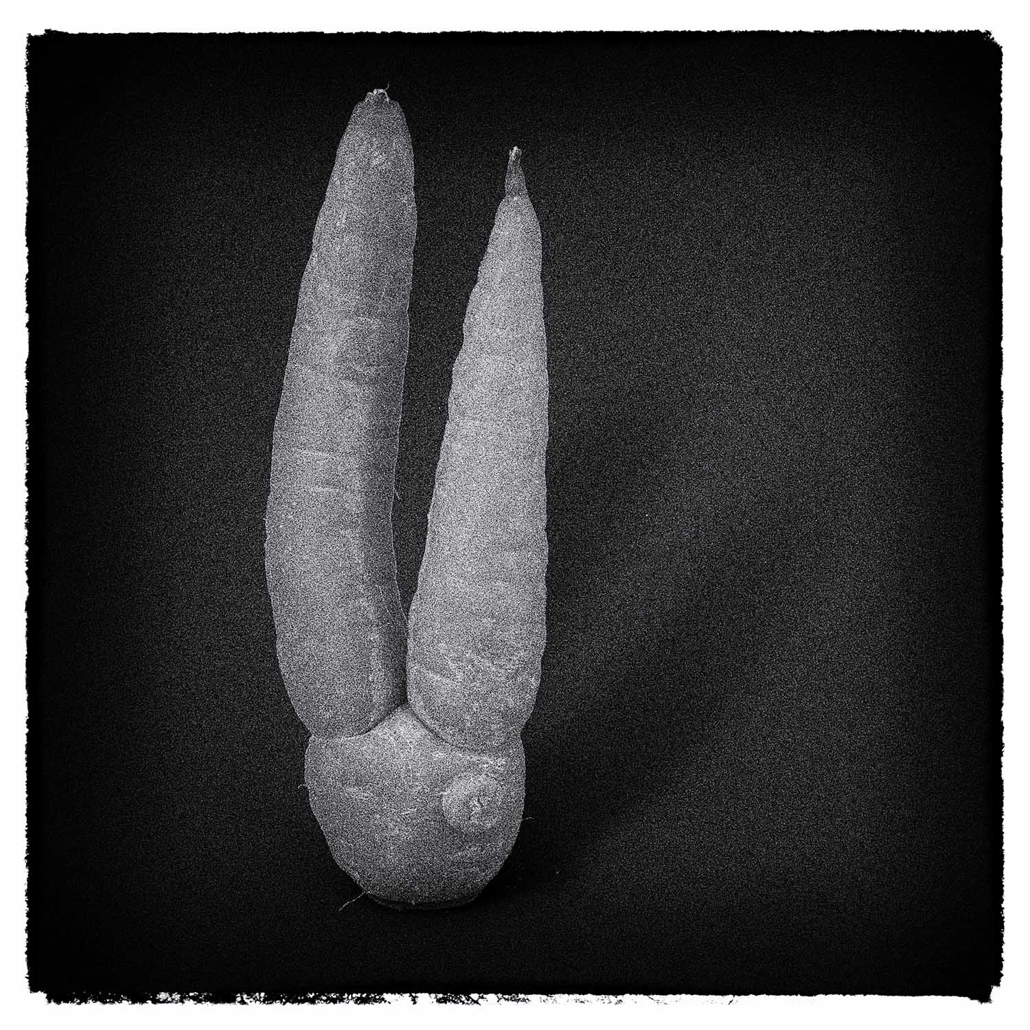 Steve's root vegetable photography