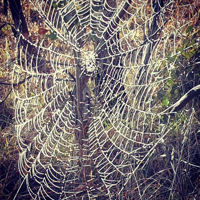 Where there's a web there's a...