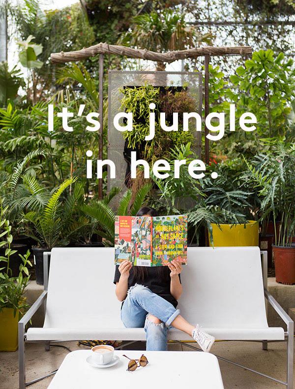 email-jungle.jpg