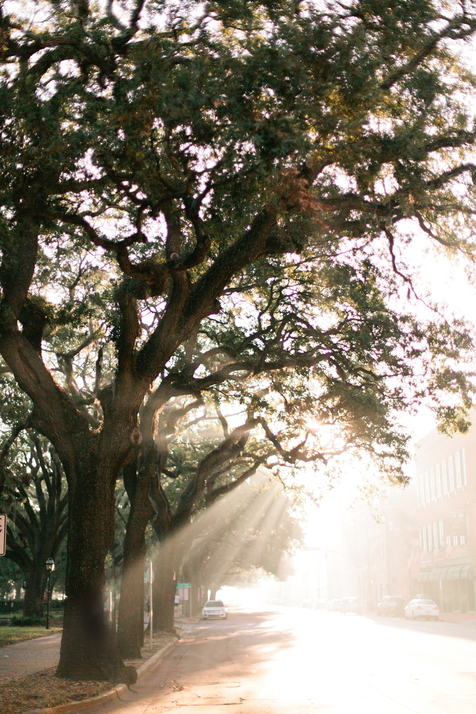 Picture of early morning light through large oak trees in historic downtown Savannah, Georgia.