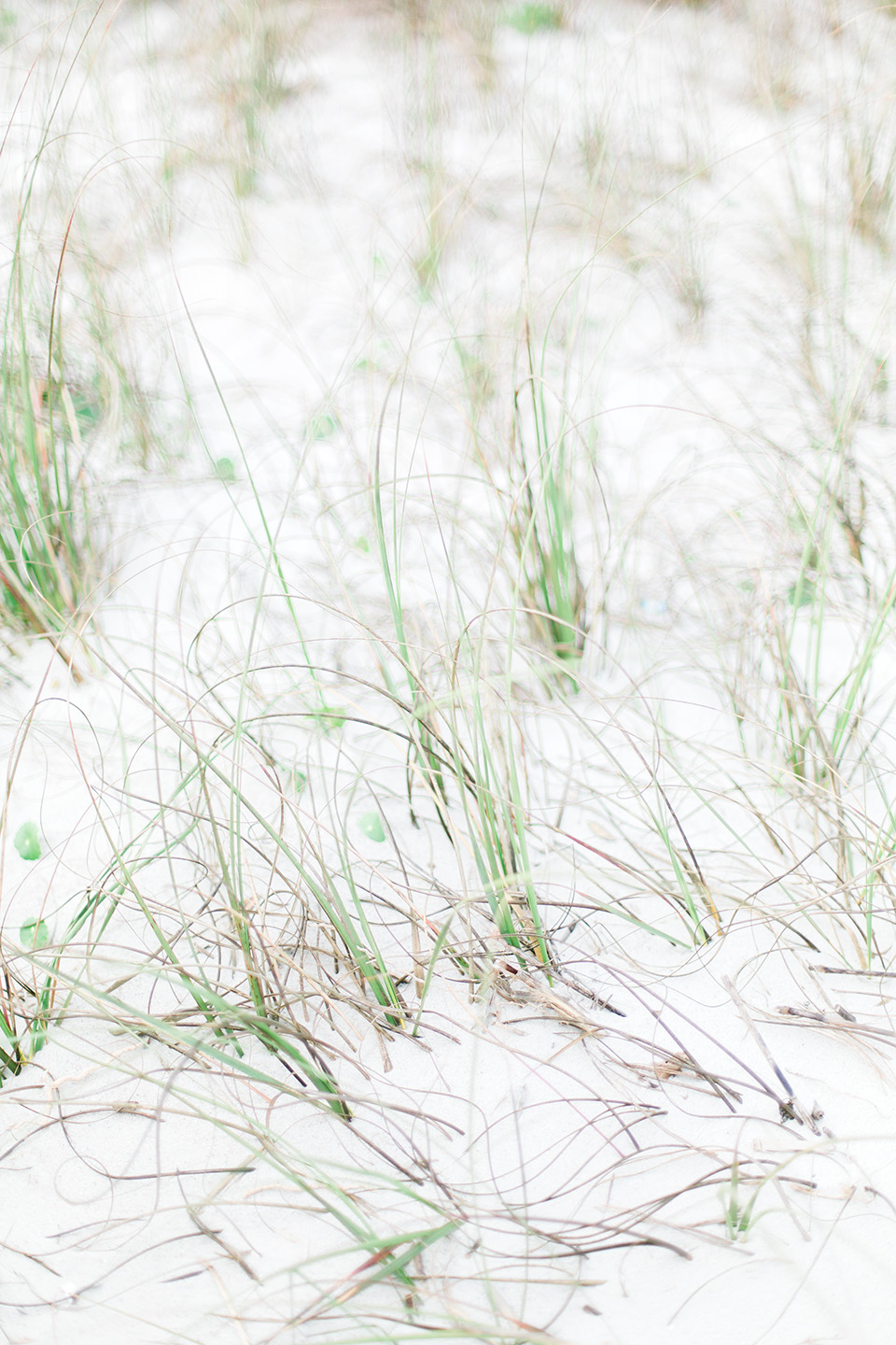 Picture of white sand and dune grass at the Omni Amelia Island Plantation Resort.