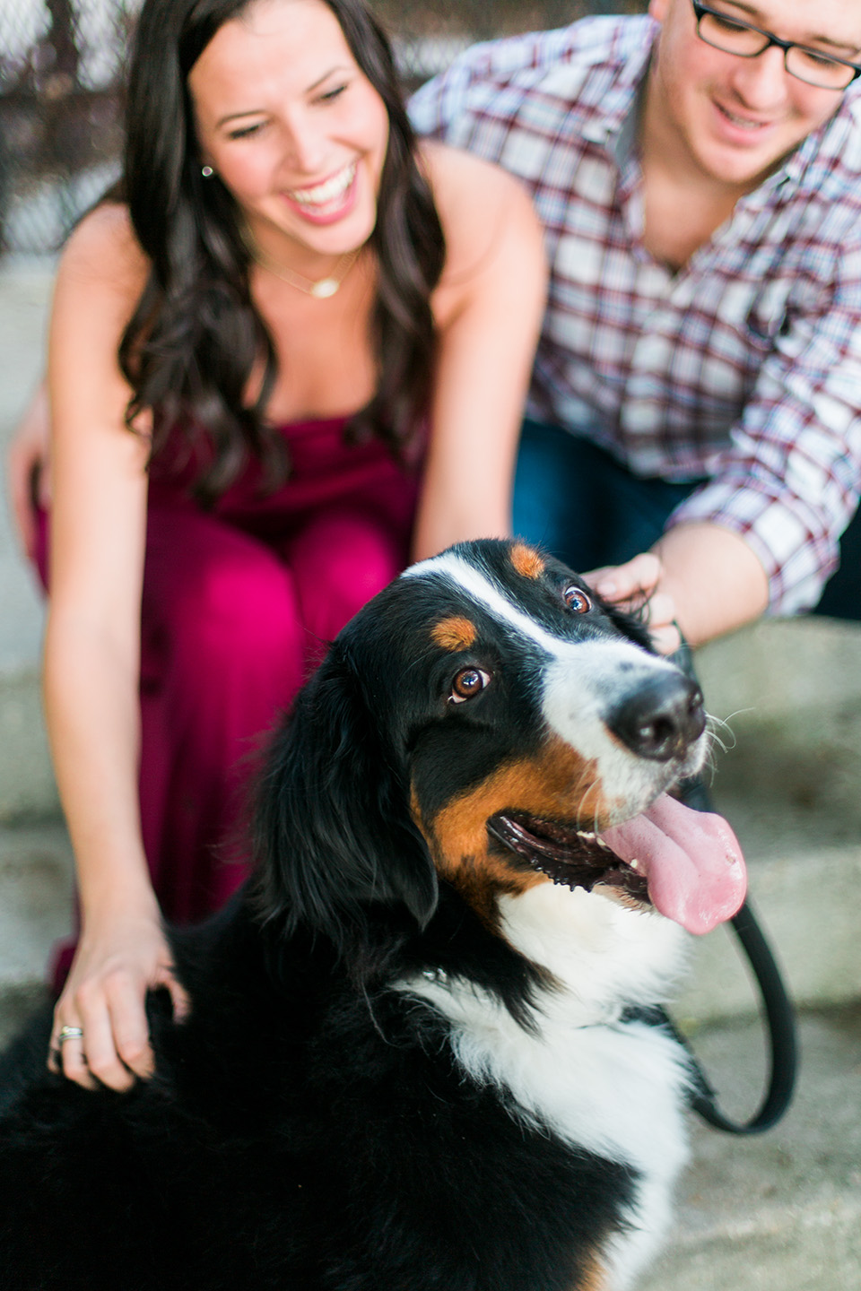 Picture of a Bernese Mountain Dog sitting with a couple in the background downtown Orlando, Florida.