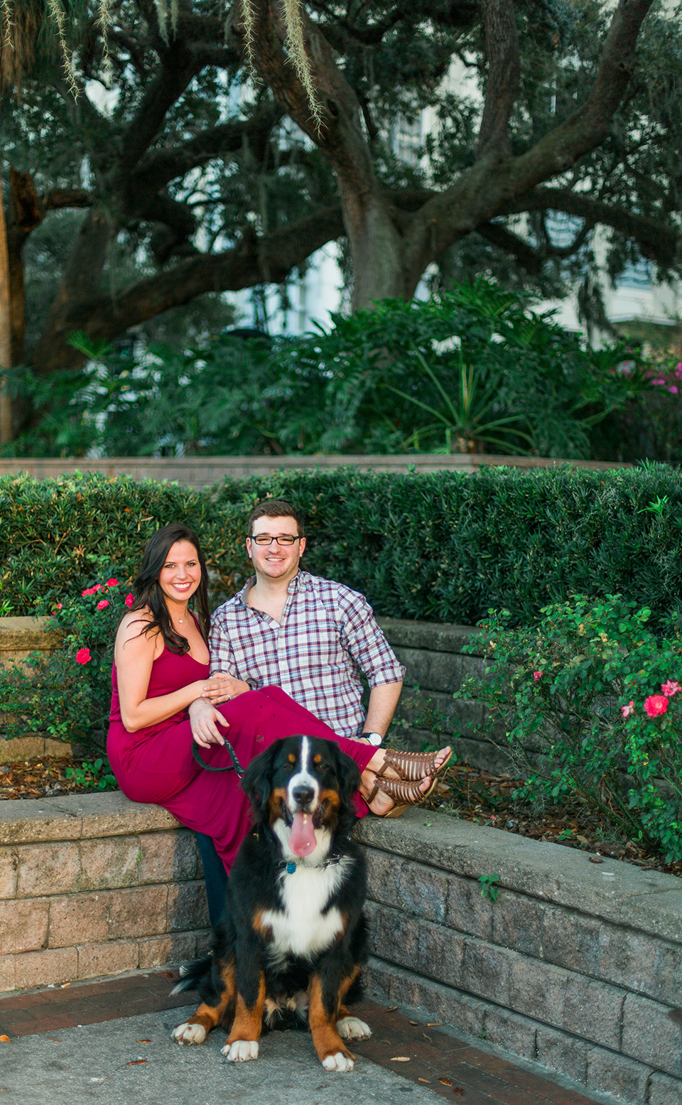 Image of an engaged couple with their Bernese Mountain Dog in downtown Orlando, Florida.  They are all sitting together and smiling with greenery in the background.