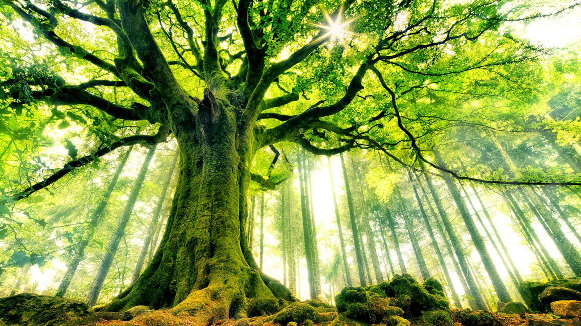 Ancient-Tree-HD-Wallpaper.jpg