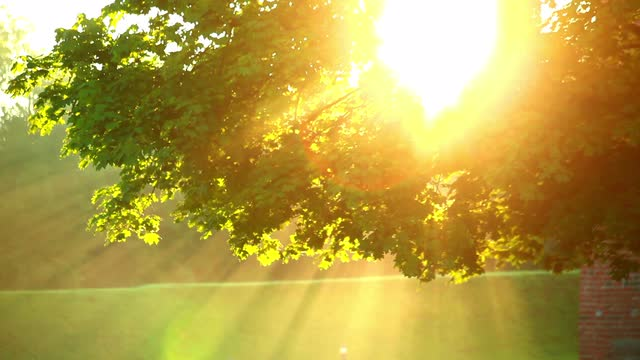 sunlight-in-trees_41irueryl__M0000 copy.jpeg