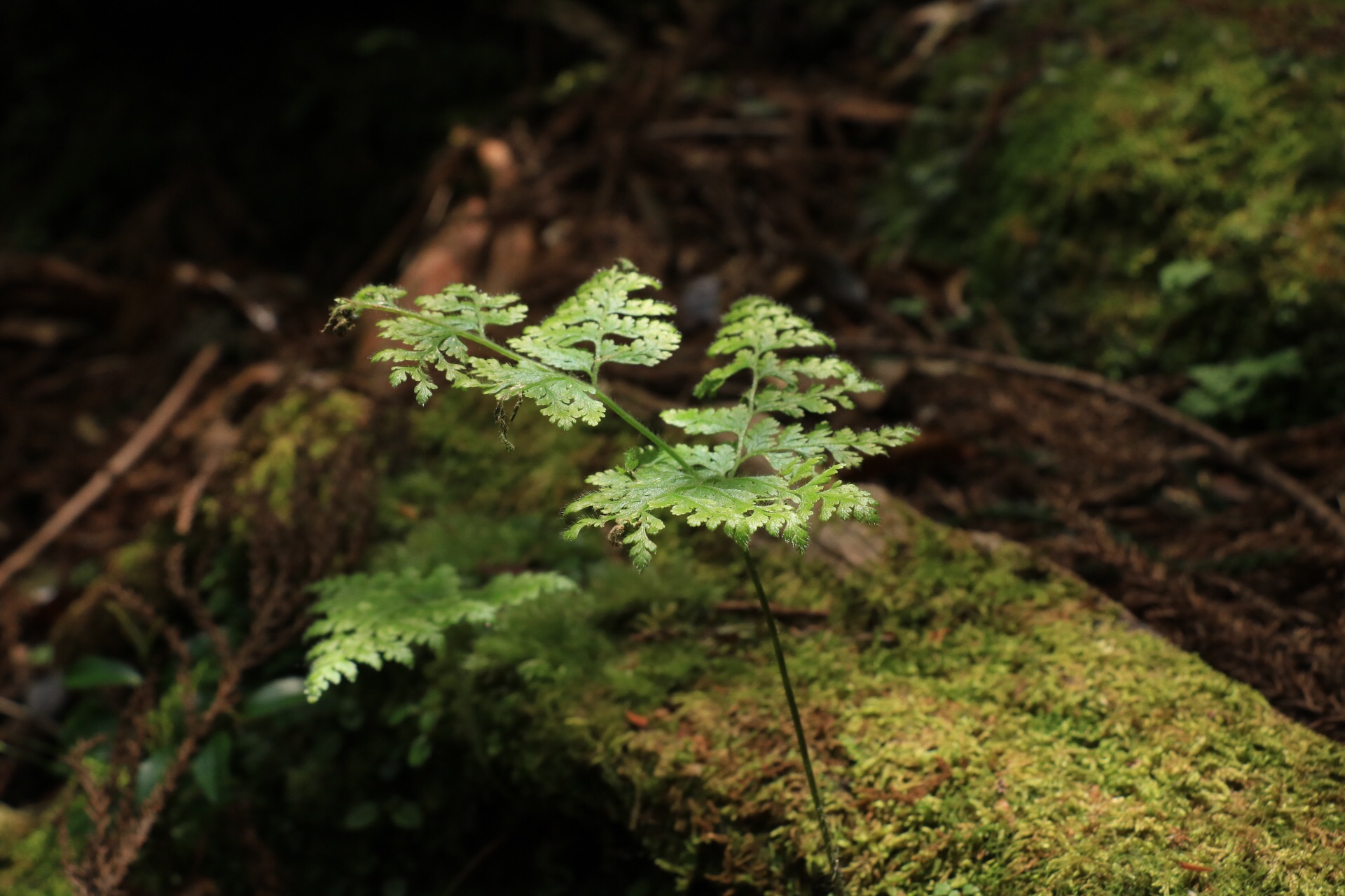fern friends -- some of the first inhabitants.