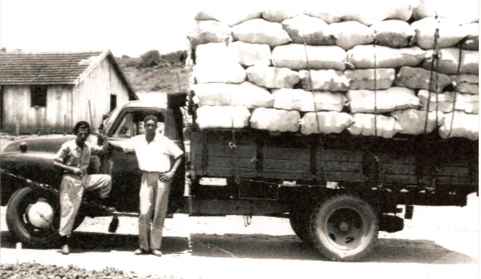 Brazilian Cotton