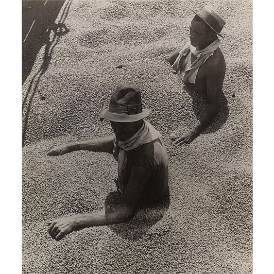 Coffee workers in Brazil