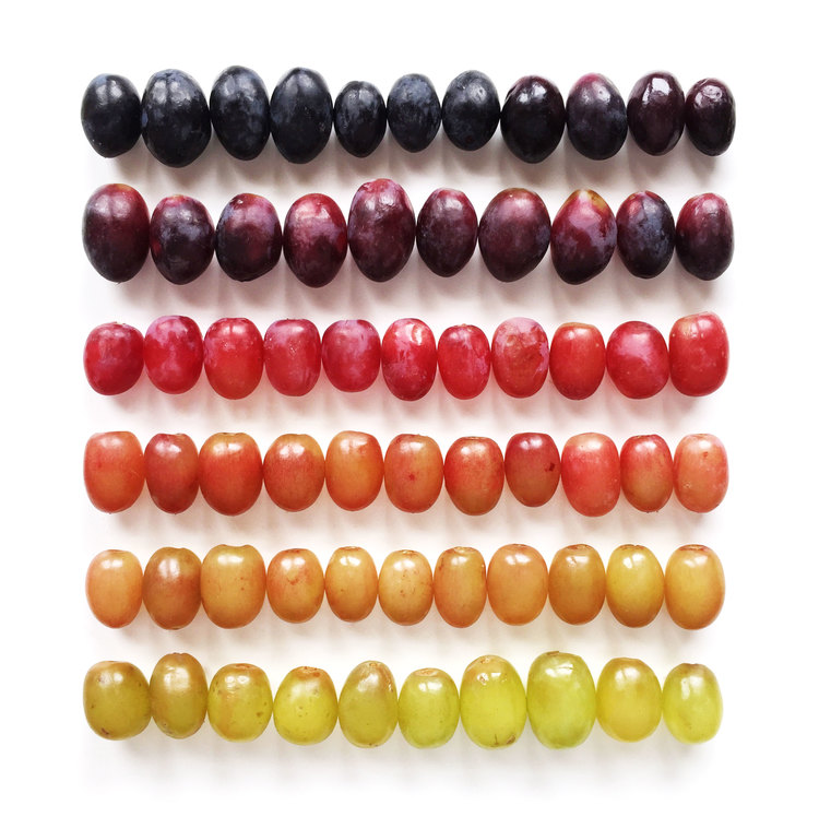 wright-kitchen-grapes-gradient-goodfromyou.jpg