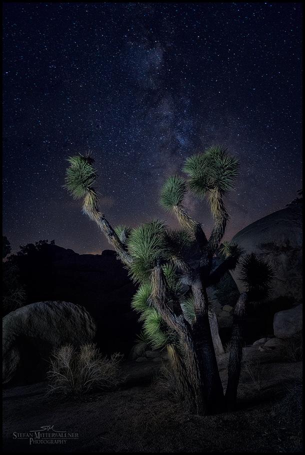 Joshua Tree at Nightrest