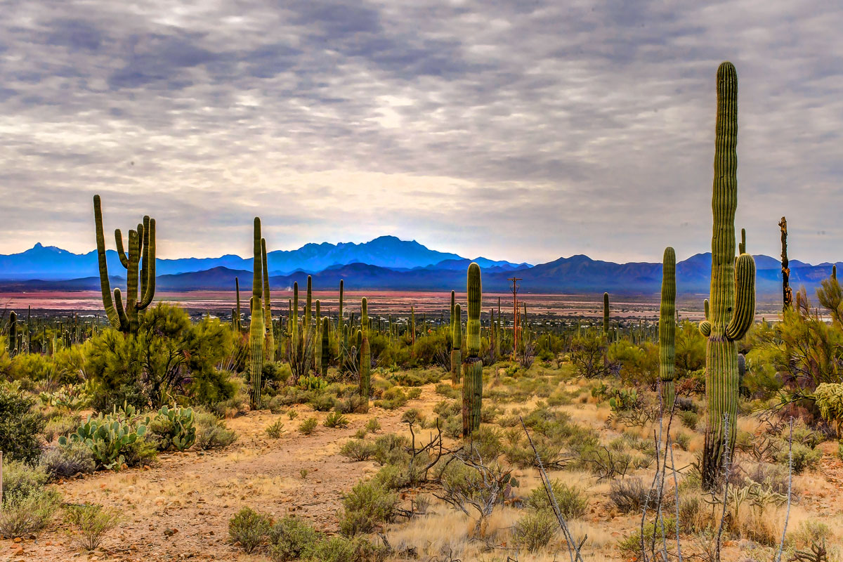 Saguaro_09.jpg