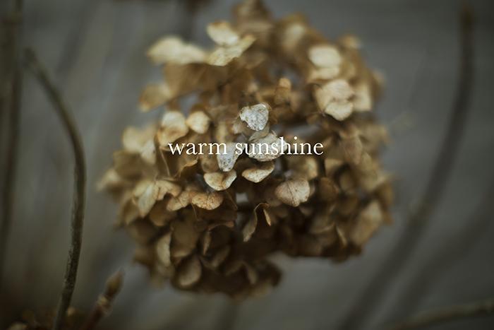 warmsunshine.jpg
