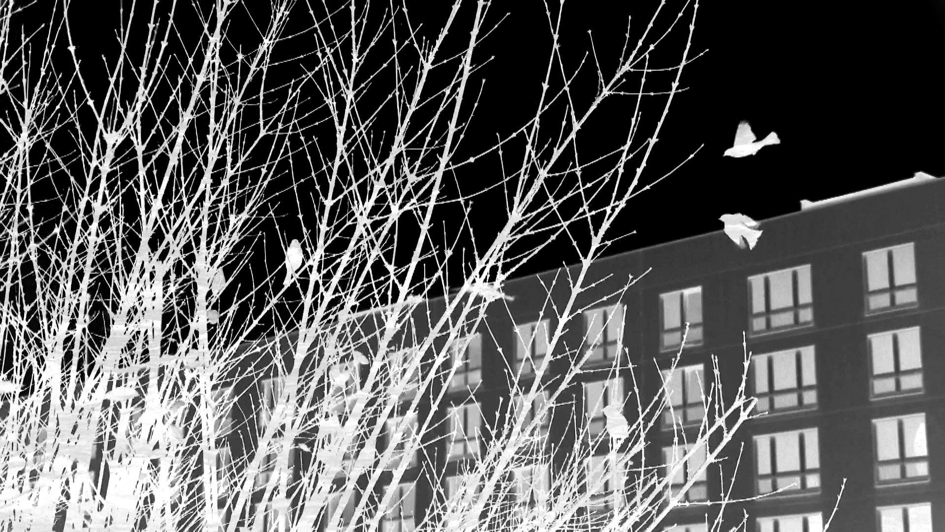 outside films 3_thursday_7.jpg