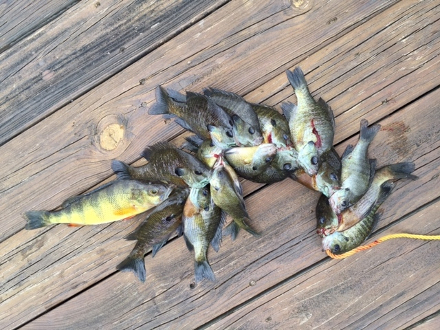 One 12 inch perch also crashed the party.