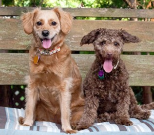 dogs-for-testimonial1-e1331868702839.jpg