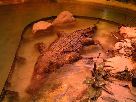 African crocodiles 2401854881[K].JPG