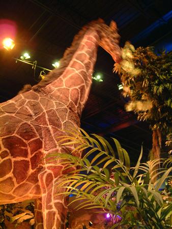 Giraffe eating 2401854719[K].JPG