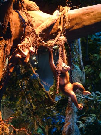 Monkey tree 2401854583[K].JPG