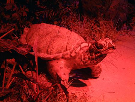 Turtle 2402685622[K].JPG