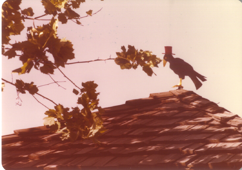 Spillikin Corners My Crow 3484160015[K].JPG