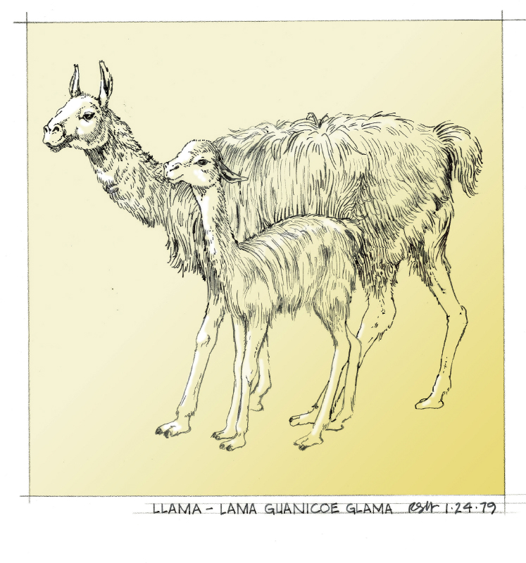 Animal Farm005c 8024954451[K].JPG