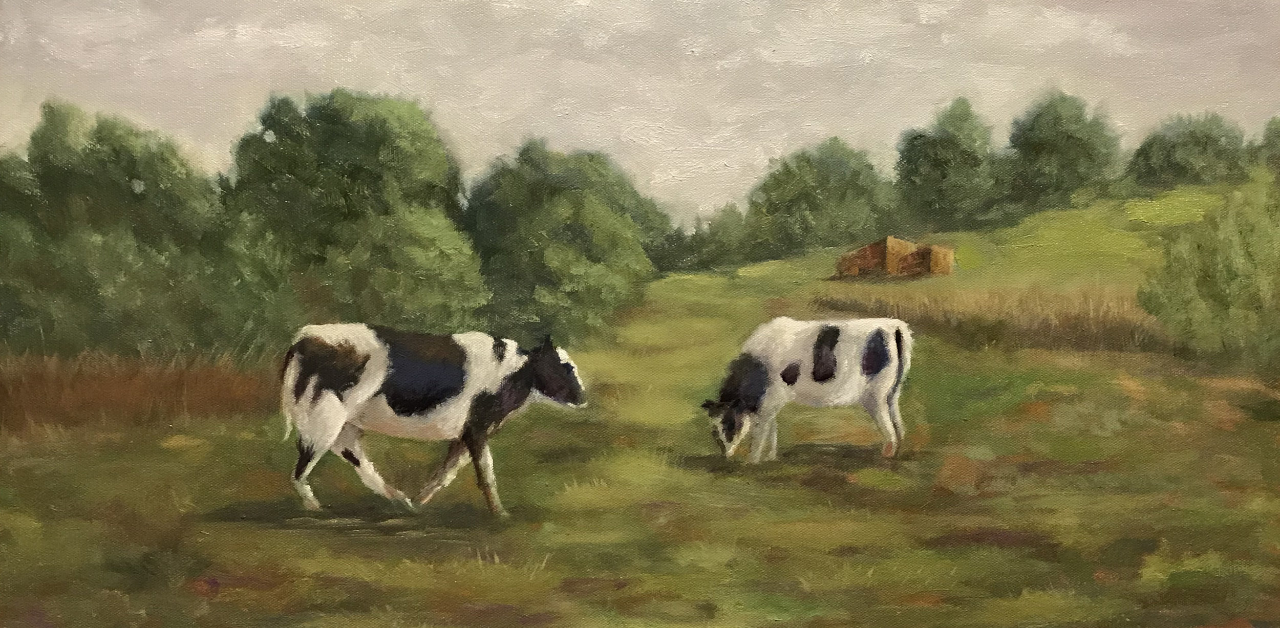 Cows for Laura Caufman.jpg