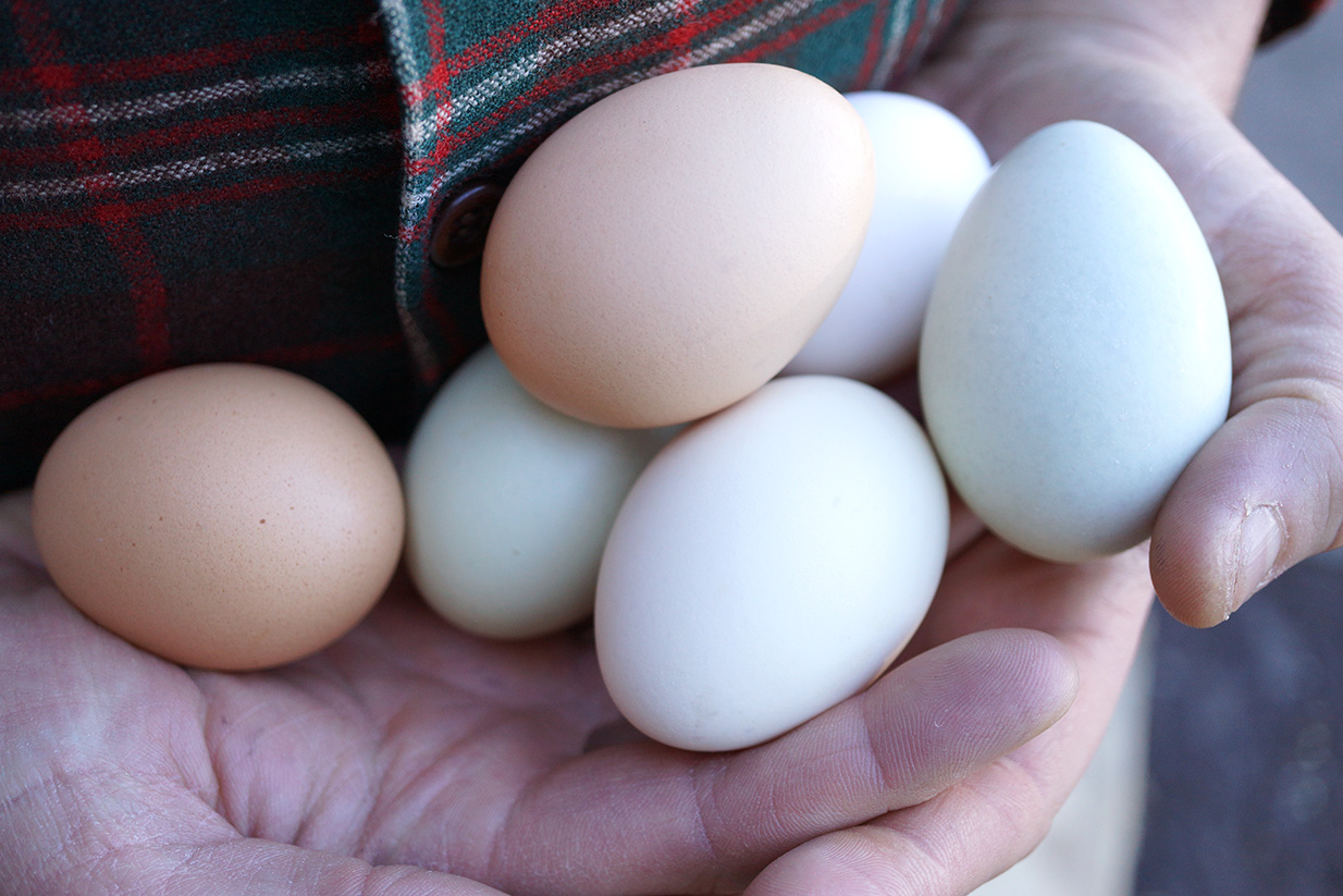 Get your hands on local eggs at the Co-op!