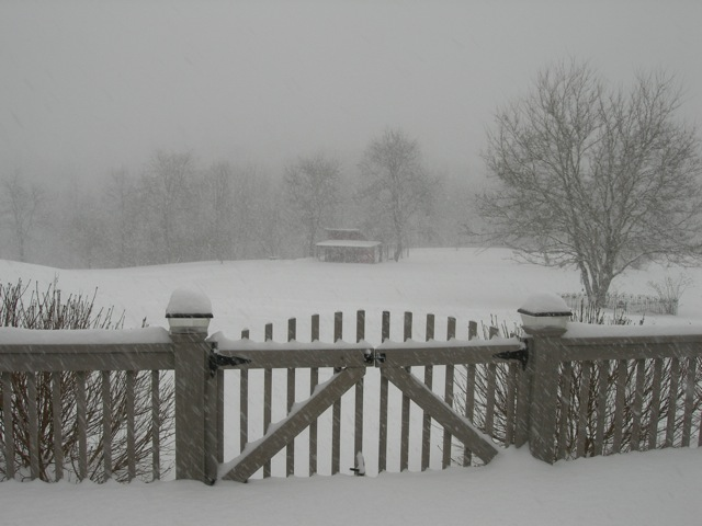 My hen house veiled by beautiful, heavy snow today.