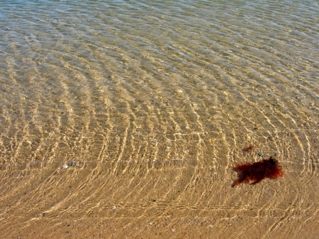 I love the colors of blue and tan and the design of the water ripples. And, of course, the red seaweed!