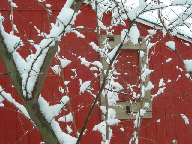 The red henhouse really shows-off the snow covered branches.
